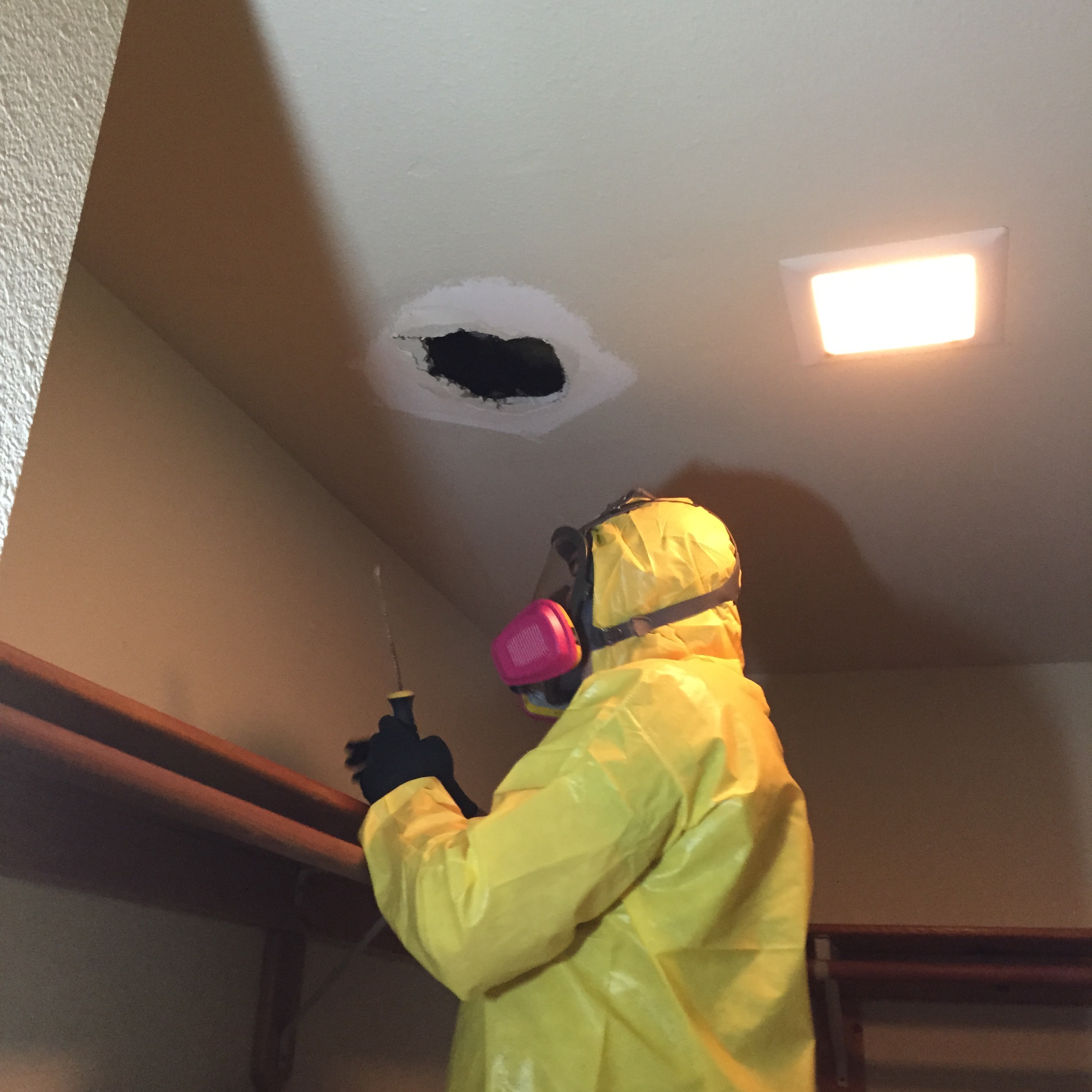 Mold Technician Opening Mold Infested Ceiling