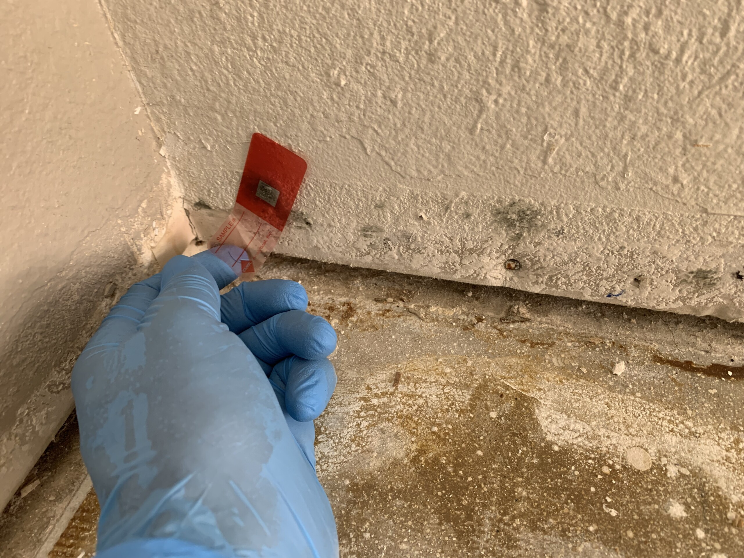 Mold Testing – DryAgain Water, Mold and Fire Restoration Services